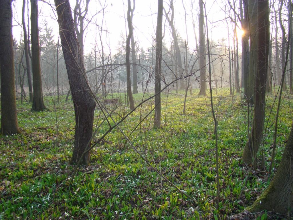 las za Mietkowem