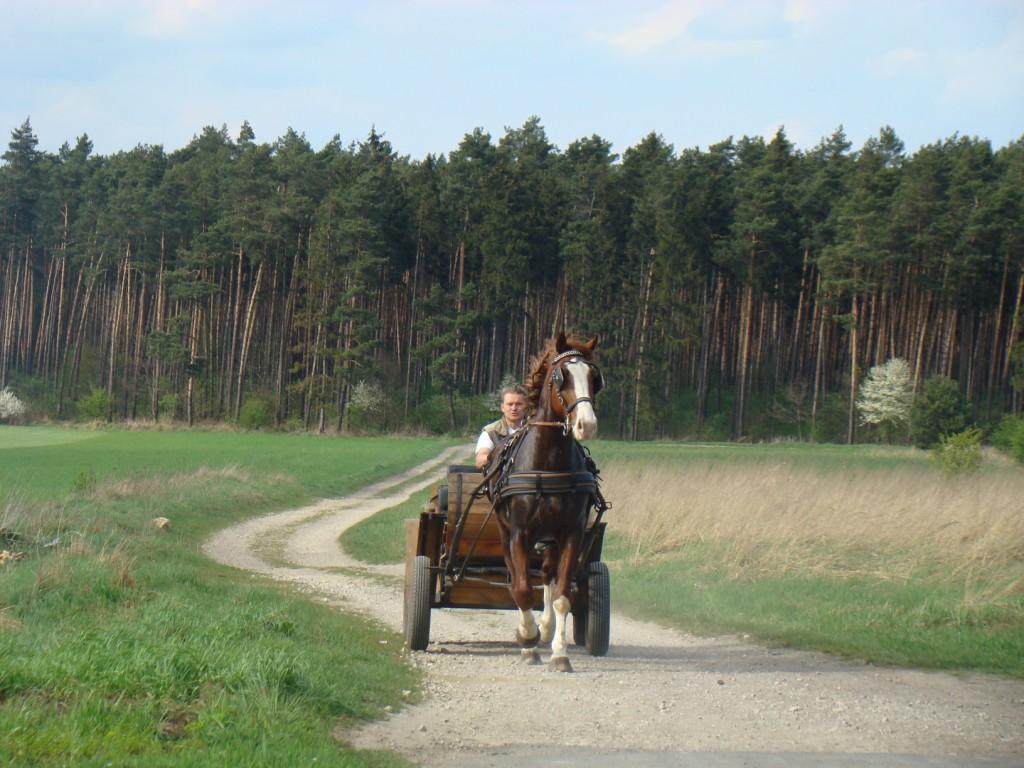 lokalne środki transportu