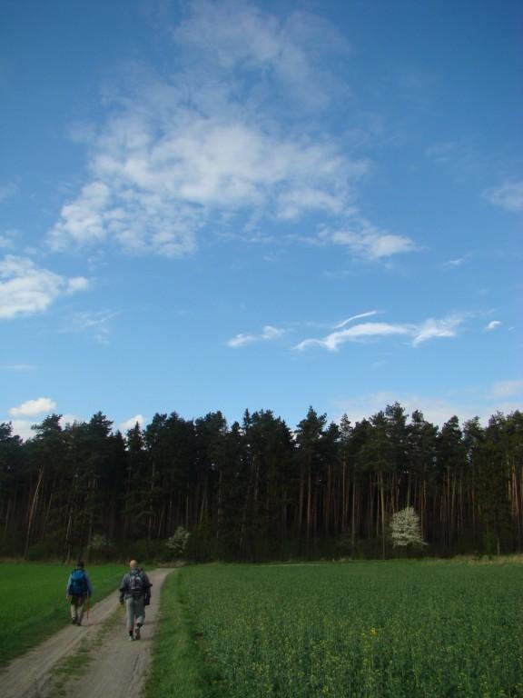 w kierunku lasu
