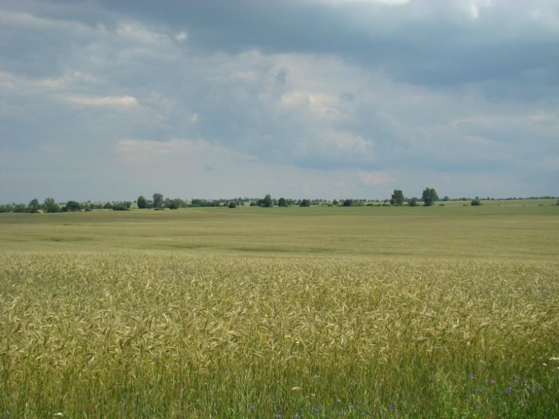 krajobrazik