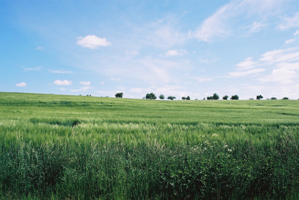 Via Regia- krajobraz